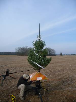 MDRA's annual Christmas Tree launch